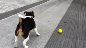 Dog Playing Fetch With Himself