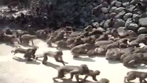 How To Feed Monkeys