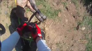 Guy On Motorcycle Rescues Calf