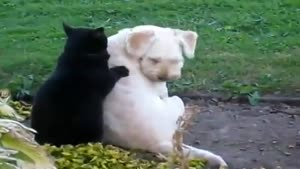 Cat Gives The Dog A Relaxing Massage