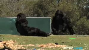 Awesome Gorilla Prank At The Zoo