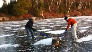 Saving A Deer From A Frozen Lake