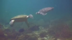Sea Turtles High Five