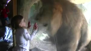 Lion Does Not Like Girl