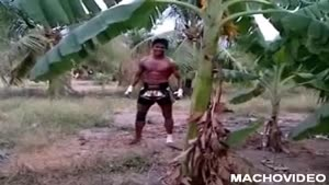 Muay Thai Kickboxer Chops Down Tree