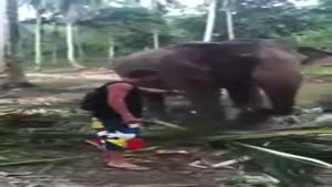 Elephant Hits Annoying Guy
