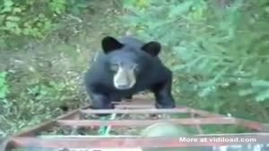 Bear Quickly Turns Around
