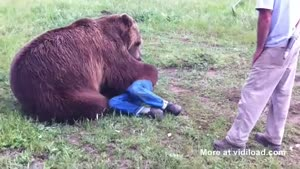 Grizzly Bear Cuddles His Owner