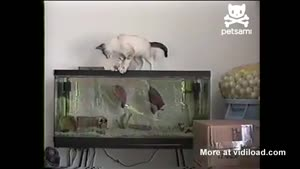 Cat Gets Bitten By Fish