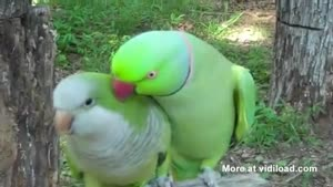 Parrot Wants A Kiss