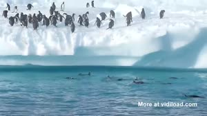 Flying Pinguins