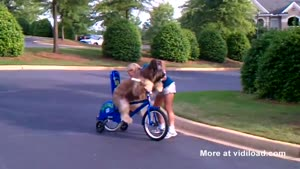 Teaching A Dog To Ride A Bicycle