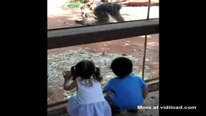 Monkey Peekaboo Ends With A Surprise