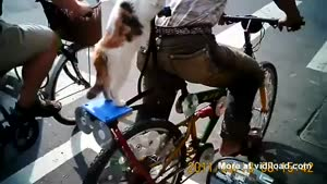 Cat In A Cool Hat Hitching A Ride On Owner's Bicycle