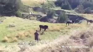 Fool Tries To Touch Wild Horse