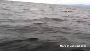 Whale Scares Fishermen