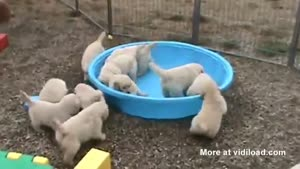 Empty Pool Confuses Puppies