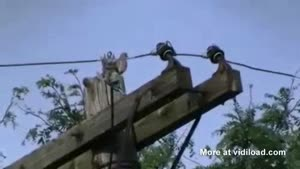 Magical Disappearing Bird