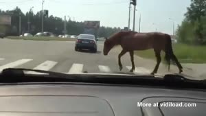 Horse Crosses Road At Pedestrian Crosswalk