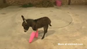 Cute Little Donkey With Pink Casts