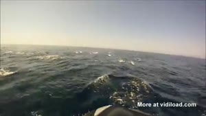 Huge Group Of Dolphins Swimming With Jetski