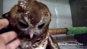 Little Owl Wants To Cuddle