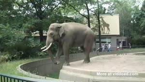 Elephant Throws Poo At Zoo Visitor