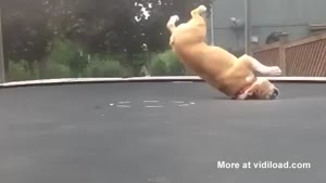 Dog Freaks Out On Trampoline