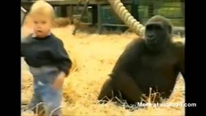 Small Child Playing With Gorillas