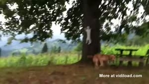 Cat Plays Tag With A Dog