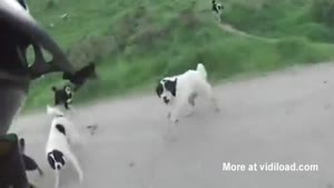 Man Riding His Bicycle Encounters Dogs