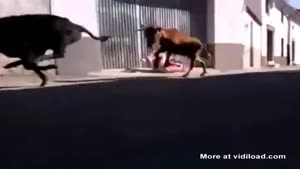 Chick Tries To Get Away From Bulls