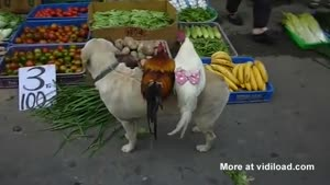 Dog Sells Chickens For Just 10 Yen