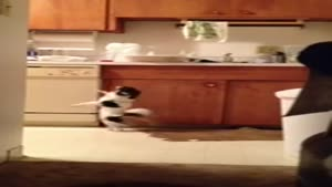 Chihuahua Caught Doing Salsa Moves In The Kitchen