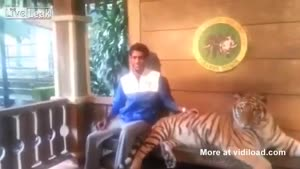 Guy Is Not Afraid Of Tiger