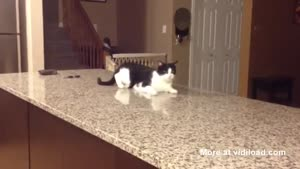 Strangely Acting Cat