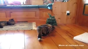 Talking Christmas Tree Surprises Cat