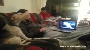 Dogs Keep In Contact Through Skype