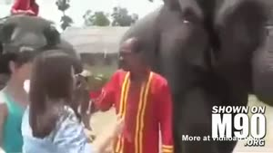 Elephant Eats iPhone