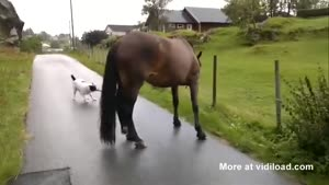 In Norway, The Dogs Walk The Horses