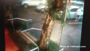 Tree Waits Until Car Pulls Out