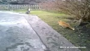 Trolling Cat Ruins Other Cat's Hunting Attempt
