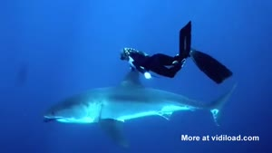 Girl Swimming With White Shark