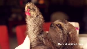 Baby Sloth Gives Flower To Woman