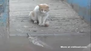 Cat Takes No Shit From Crocodile