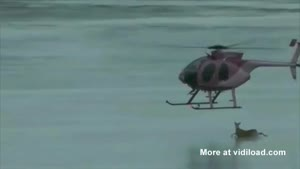 Helicopter Blows A Deer Off The Ice