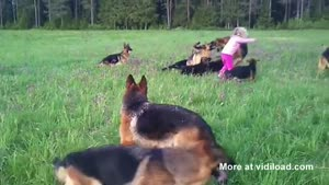 Little Girl Playing With 14 German Shepherds