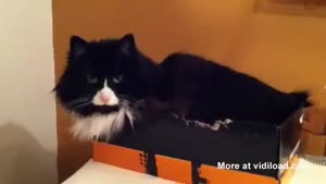 Cat Shows Who's The Boss
