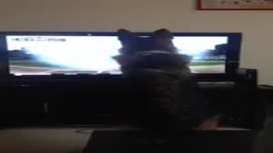 Dog Almost Ruins TV