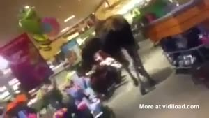 Moose Walks Into Supermarket